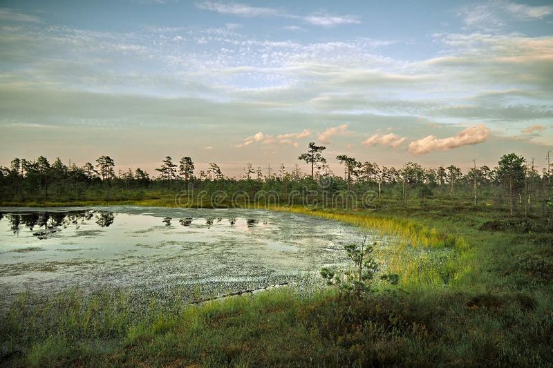 Blue sky and clouds observing over swamp stock image