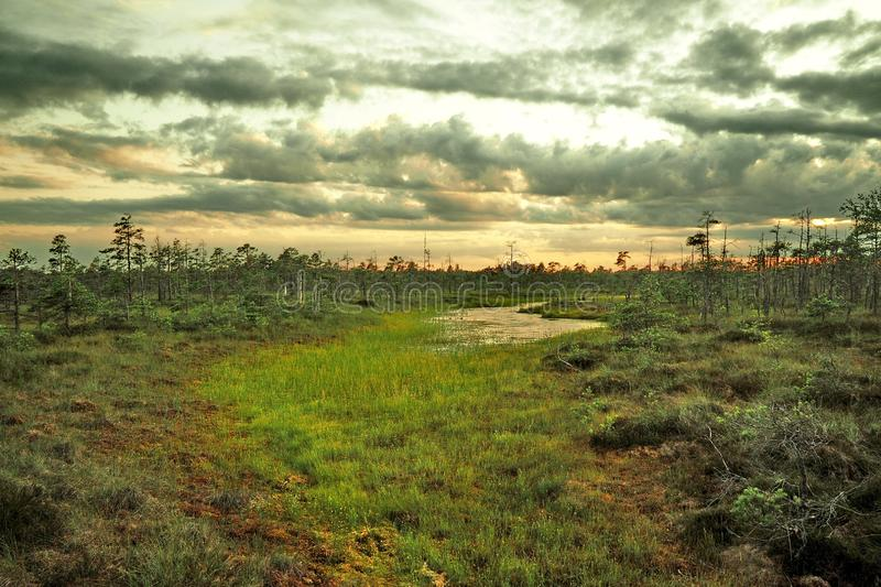 Blue sky and clouds observing over swamp royalty free stock photography