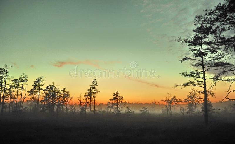 Blue sky and fog observing over swamp stock photo