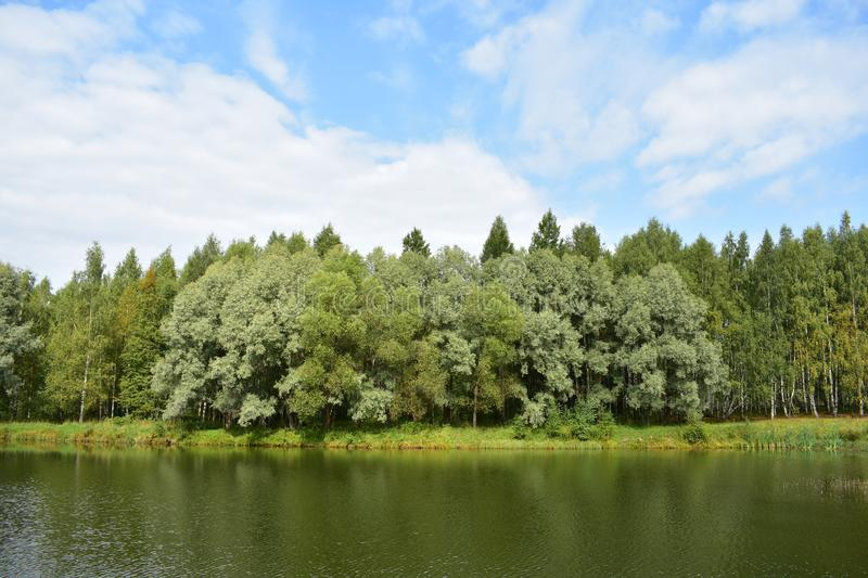 Blue sky clouds picturesque forest pond river lake, trees decorate the shore birch stock images