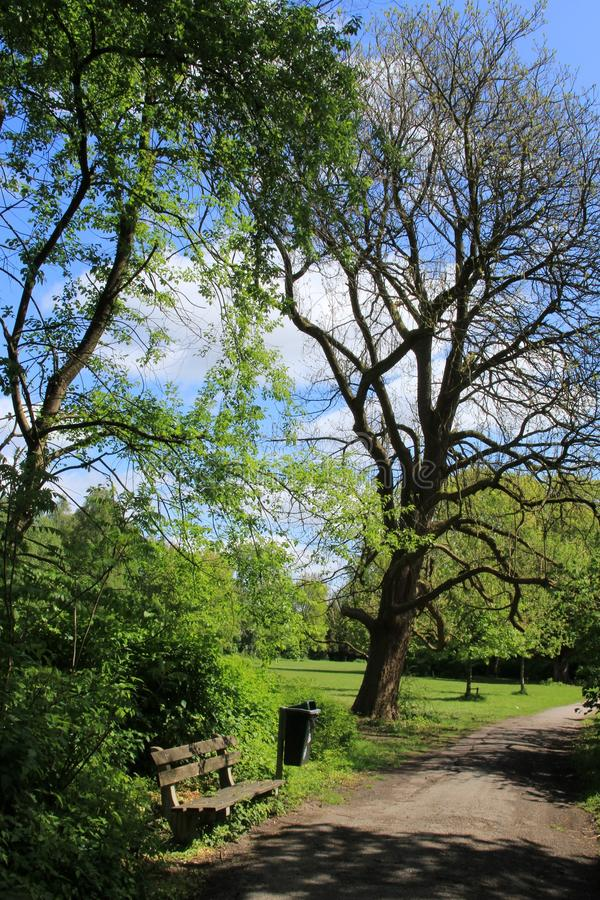 Blue sky with clouds, a wooden bench, a waste bin and trees in the park in spring. stock image