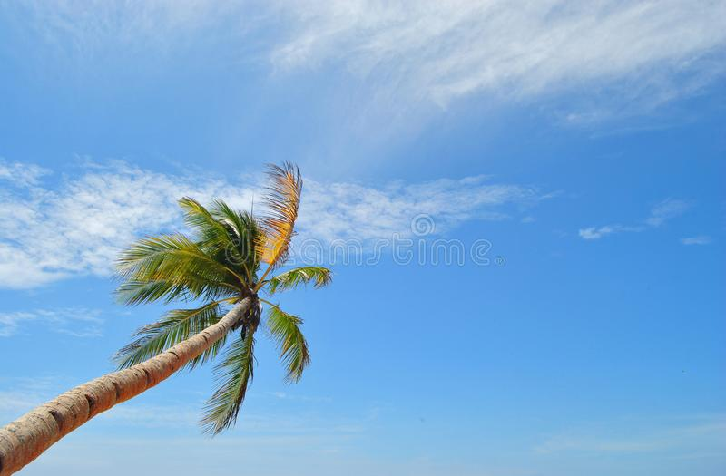 Blue sky and The Coconut Tree royalty free stock photos