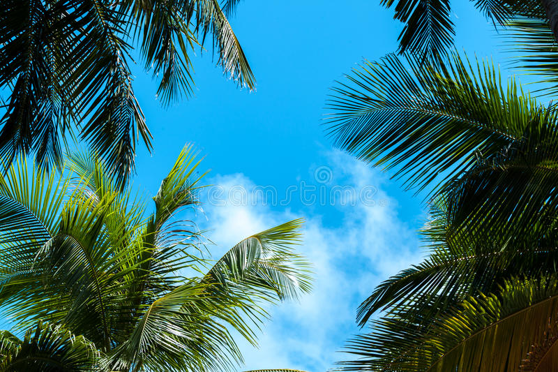 Blue sky with a few clouds and palm trees. Maldives stock photography