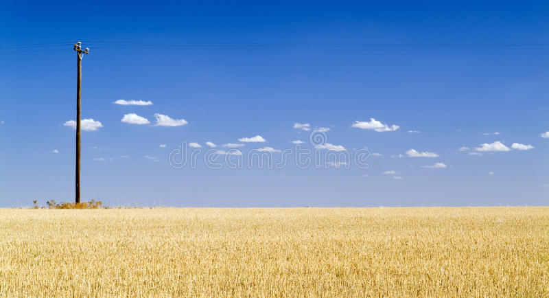 Blue Sky Field. Harvested golden field with a single power pole and blue sky royalty free stock photography