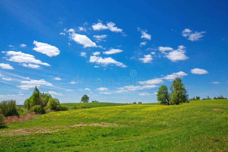 Blue sky and field of dandelion, spring landscape stock photography