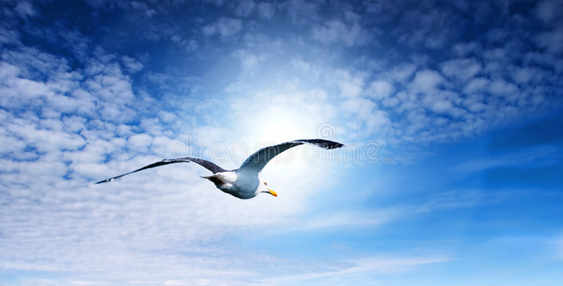 Blue sky and flaying seagull.  stock image
