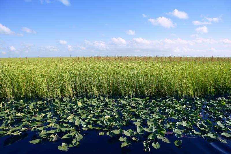 Download Blue Sky In Florida Everglades Wetlands Stock Image - Image: 12962941