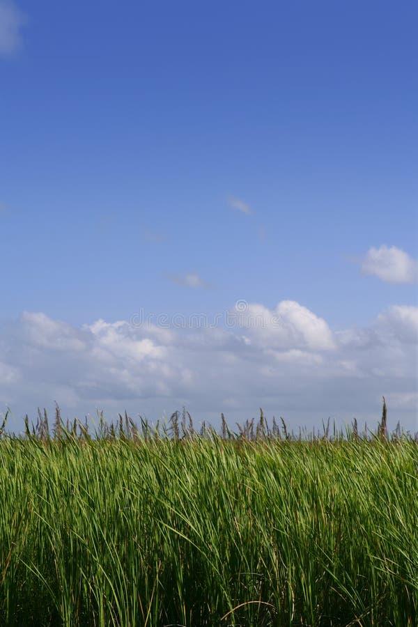Blue sky in Florida Everglades wetlands green plan stock image