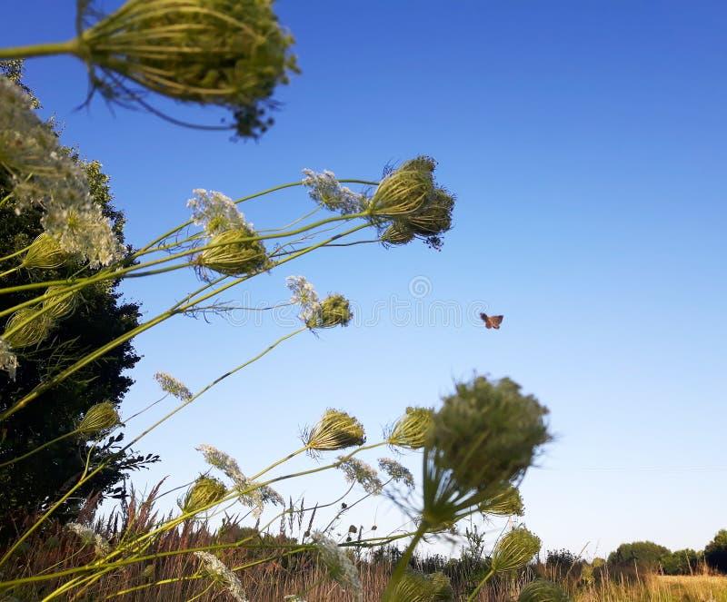 Blue sky flower tops stock images