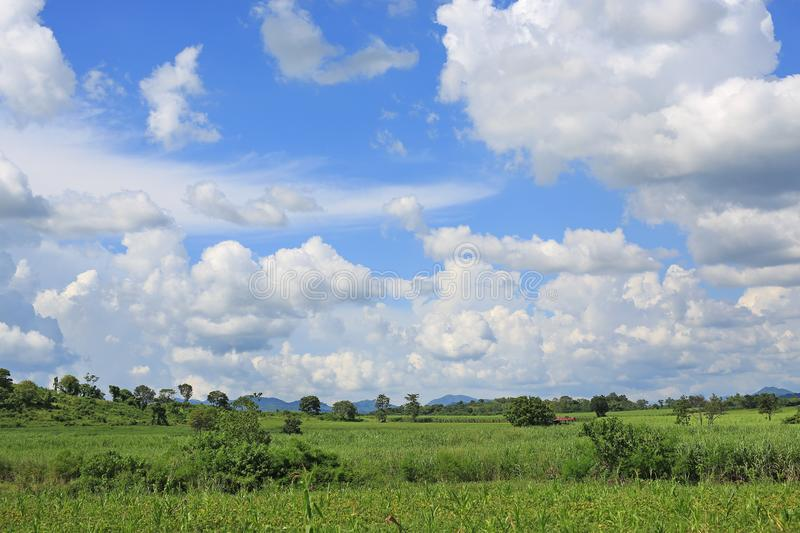 Blue sky and fluffy clouds with green field background. Mountain and meadow landscape background stock photos