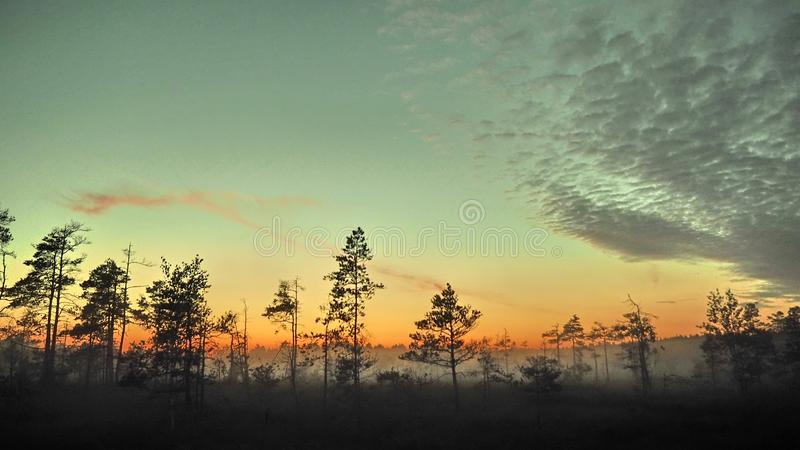 Blue sky and fog observing over swamp royalty free stock images