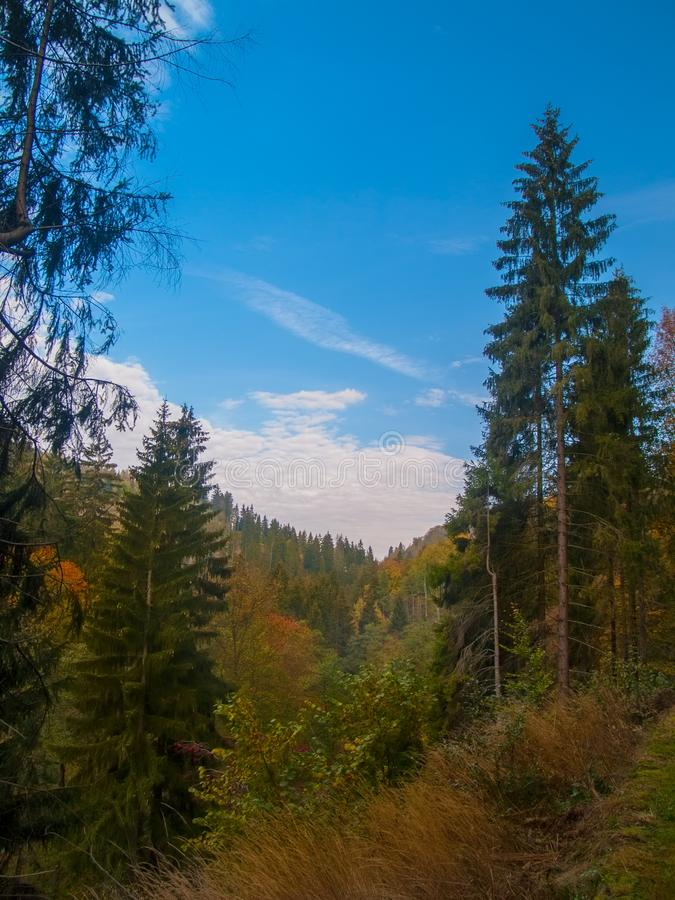 Blue Sky in a Forest in Bavaria during Autumn royalty free stock image