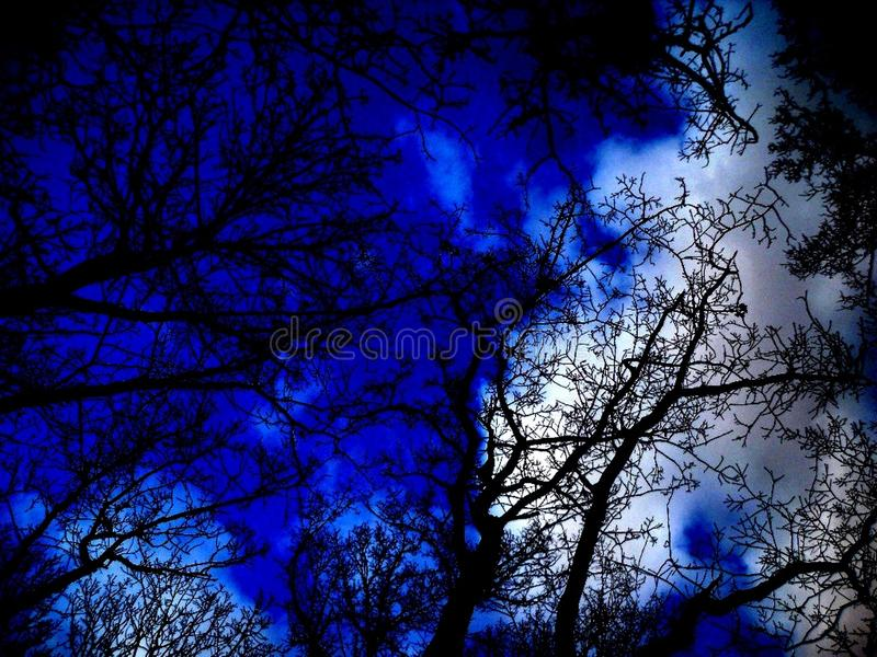 Blue sky in the forest royalty free stock photo