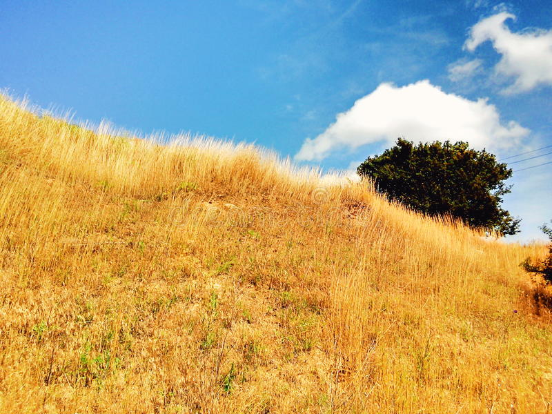 Blue sky and gold field royalty free stock image