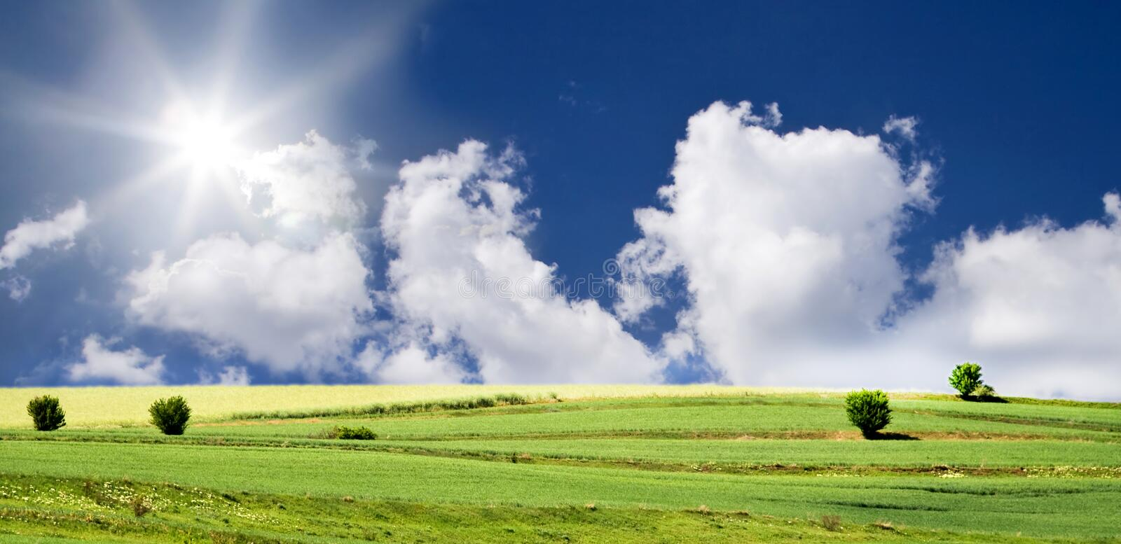 Blue sky and green field royalty free stock photography