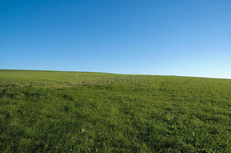 Blue sky, green grass stock photography