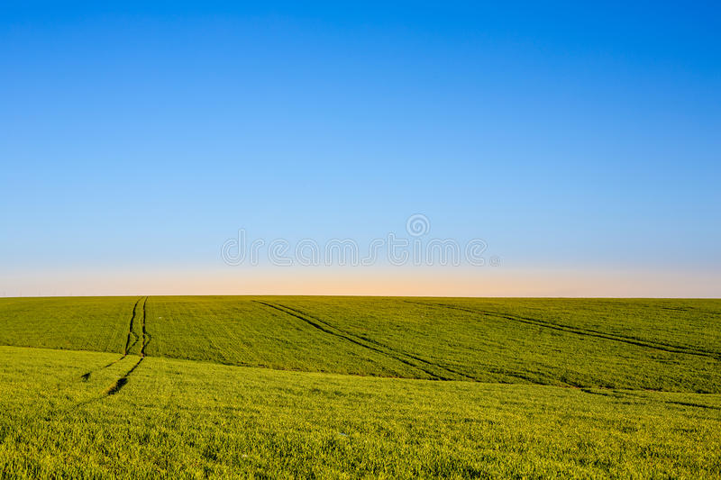 Blue sky and green grass royalty free stock image
