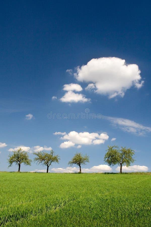 Blue Sky and Green Land. Four trees on horizon stock photo
