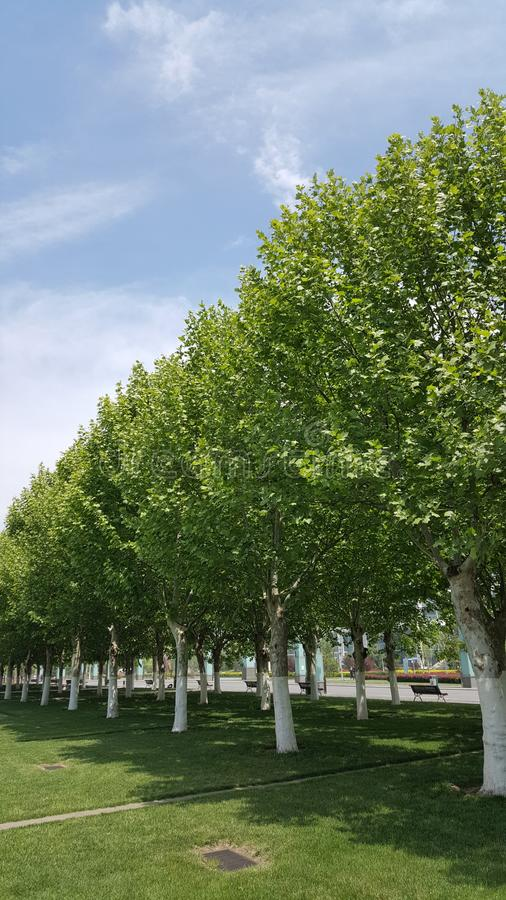 Blue sky and green trees royalty free stock photography