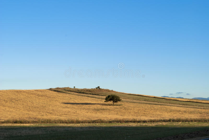 Download Blue sky stock photo. Image of tree, rural, flowers, perspective - 30499422