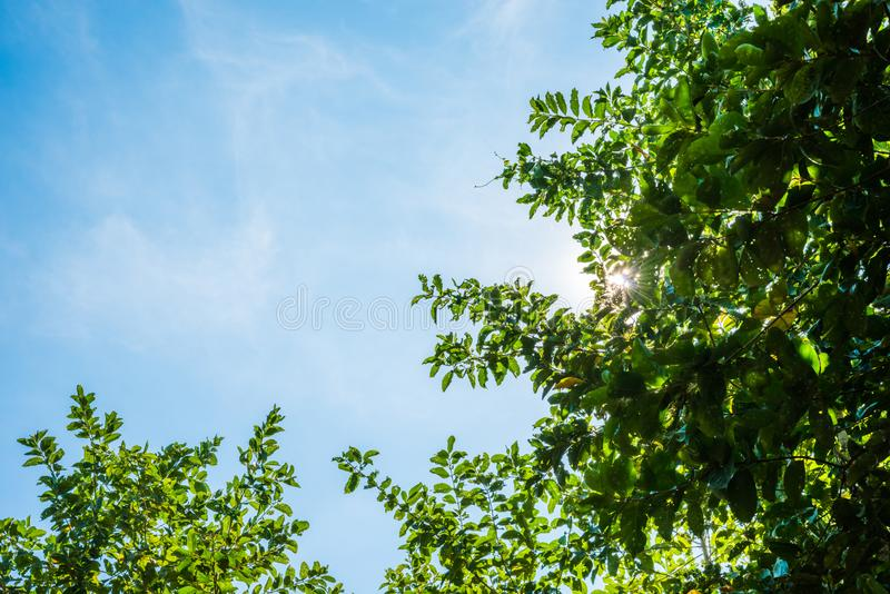 Blue sky and leaf background stock photography