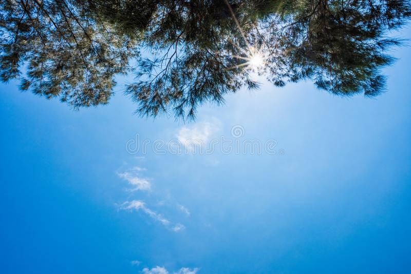 Blue sky and leaf background royalty free stock images