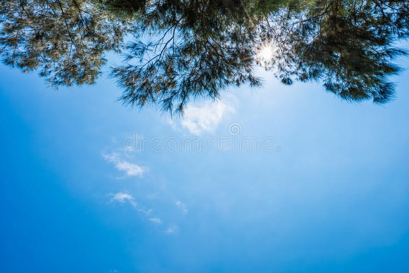 Blue sky and leaf background stock image