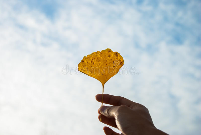 Blue sky and Leaf stock image