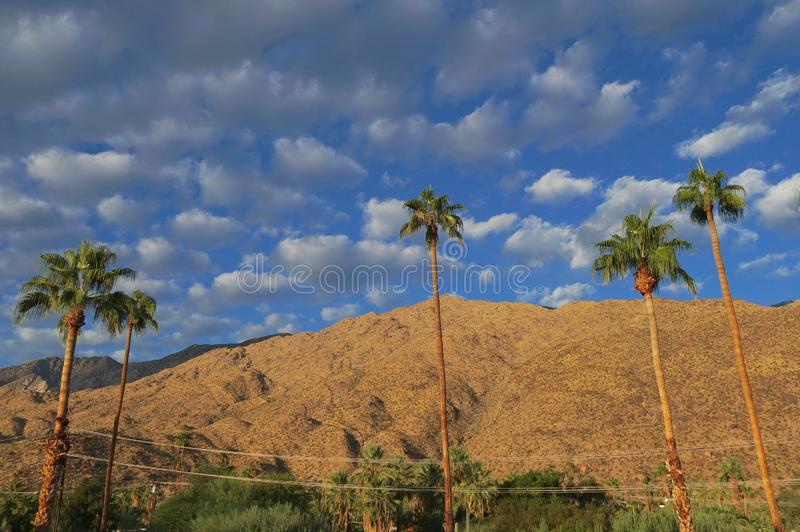 Blue Sky Morning in Palm Springs. Palm trees against a background of moutnains and a blue sky speckled with clouds on a Palm Springs morning stock image