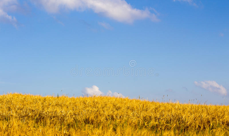 Blue sky over the field stock photo