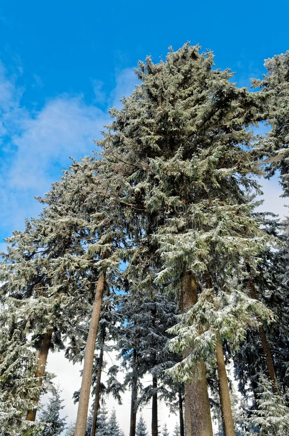 Blue sky over forest in Harz mountains while winter time. Blue sky over forest in a winter, Harz mountains national park, Germany stock photo