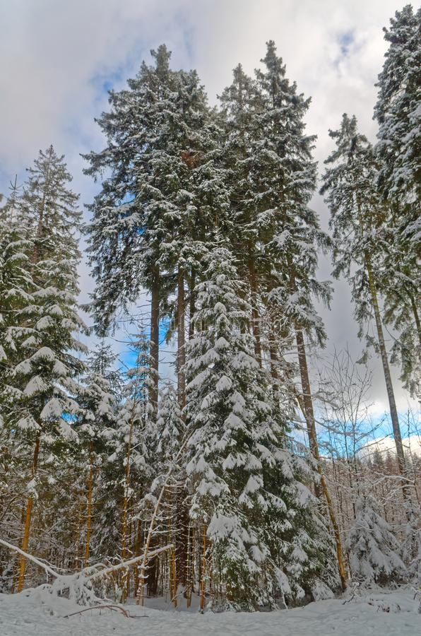 Blue sky over forest in Harz mountains in a winter. Blue sky over forest in a winter, Harz mountains national park, Germany stock photography