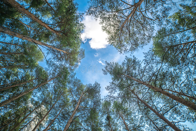 The blue sky over trees royalty free stock photos