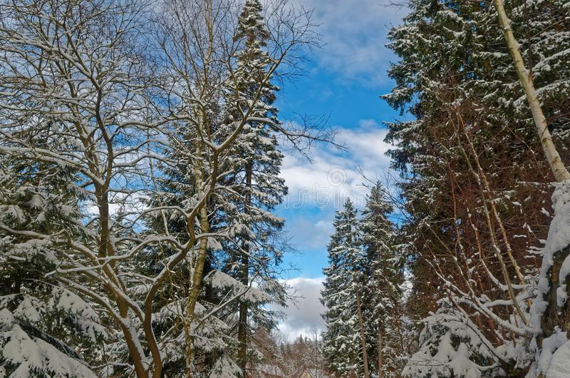 Blue sky over winter forest in Harz national park. Blue sky over winter forest, Harz mountains national park, Germany royalty free stock photography