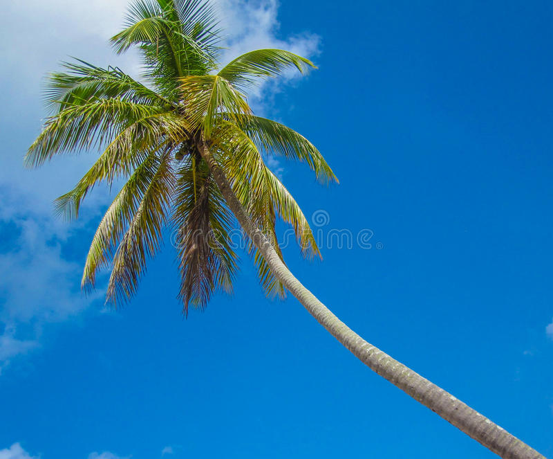 Blue Sky and Palm Tree