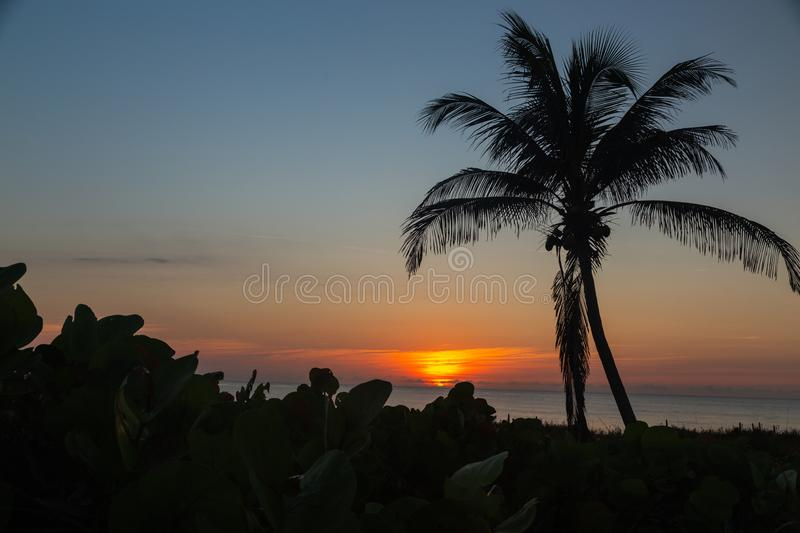 Glorious blue sky and palm tree with the sun rising on Delray Beach in Florida royalty free stock image