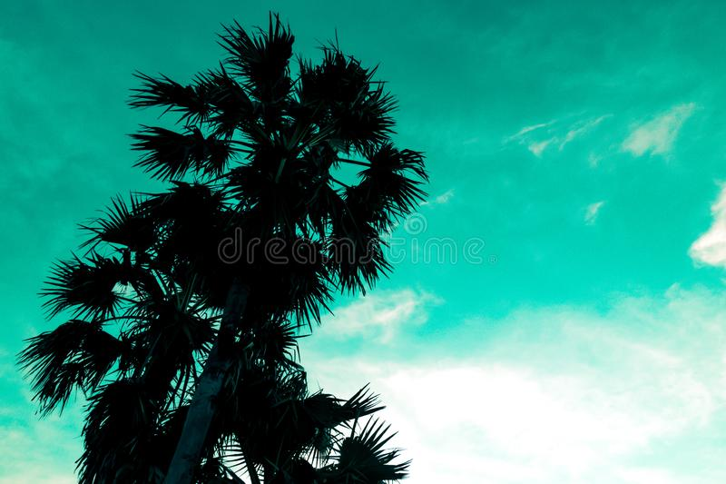 Blue sky and palm trees view from below, vintage style, summer spring lively background royalty free stock photos