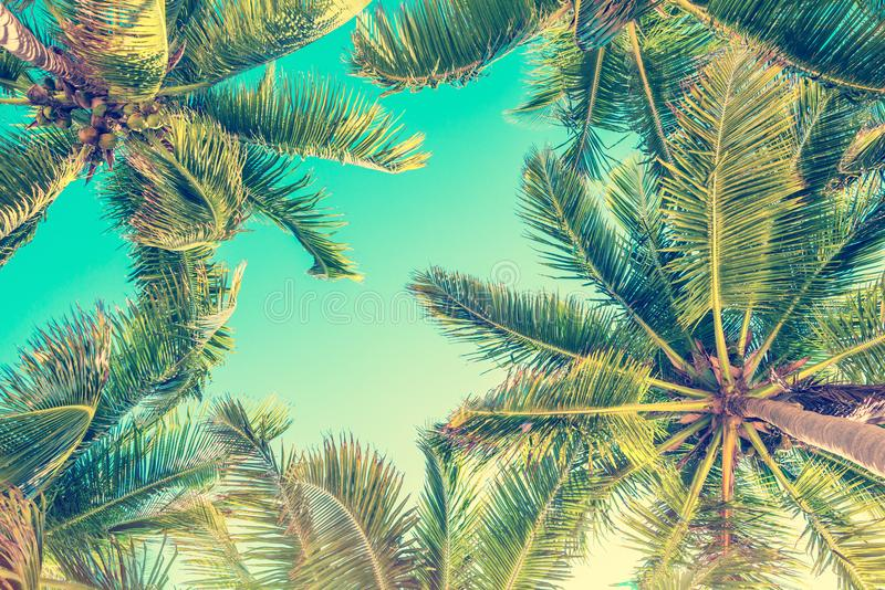 Blue sky and palm trees view from below, vintage summer background royalty free stock photo