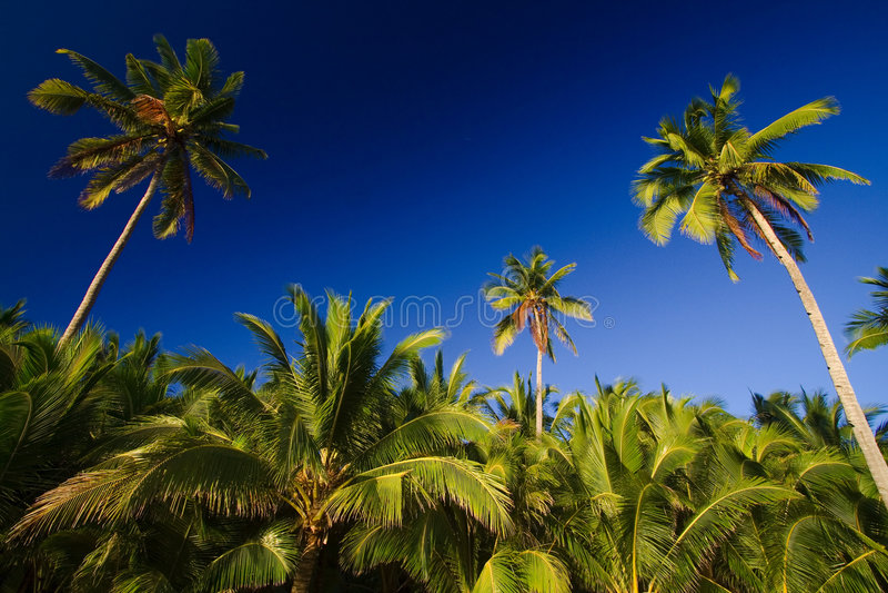 Blue sky palms stock photos