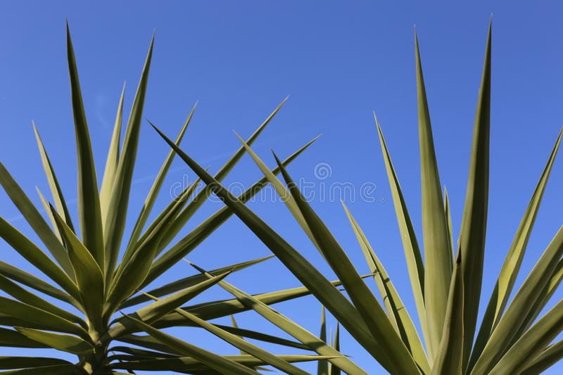 Blue sky and palmtree stock images