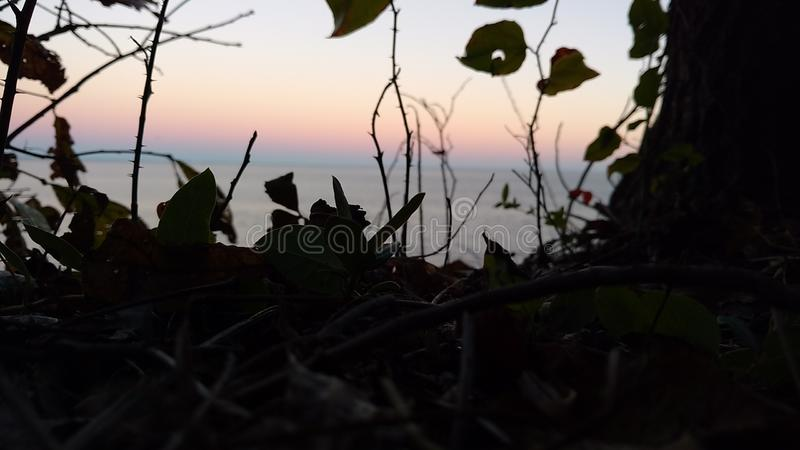 The blue sky and pink / orange sky with leaves royalty free stock photography