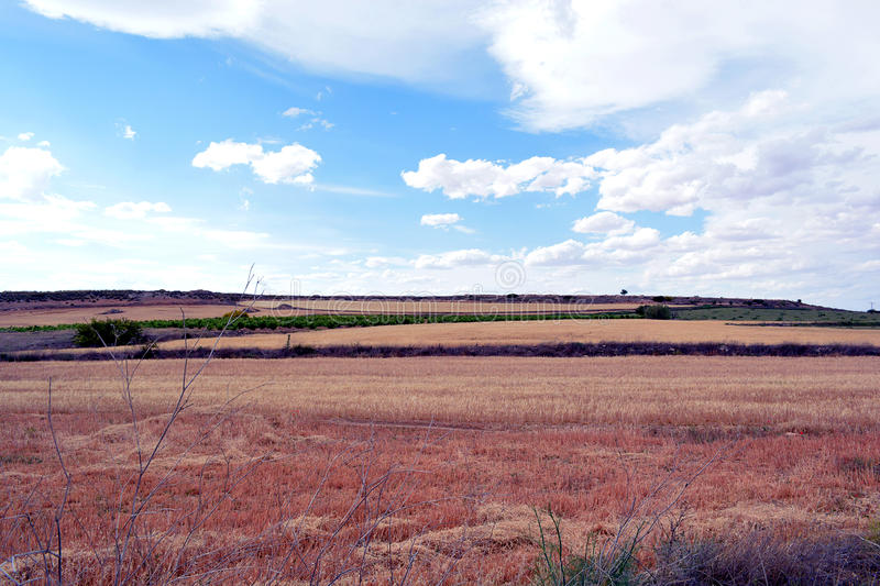 Blue sky and red grass royalty free stock images