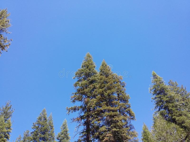 Blue sky`s trees forest sky looking royalty free stock photo