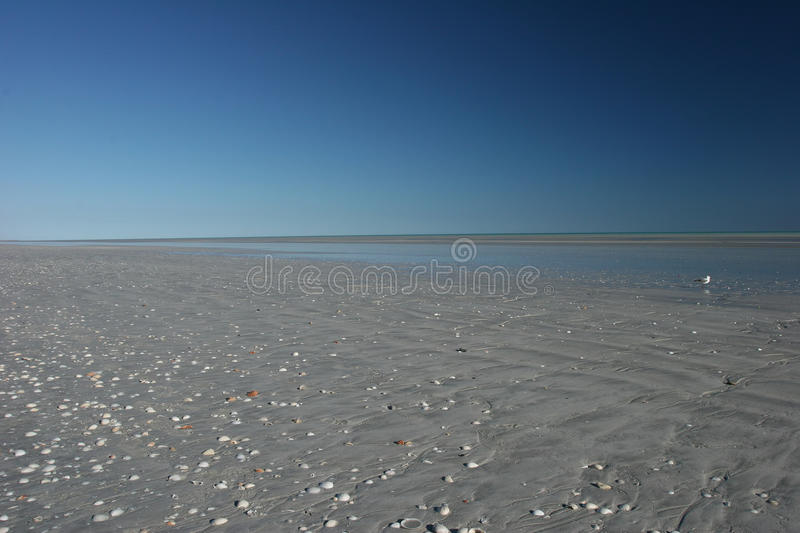 Blue sky and shell speckled beach melt at eighty mile beach Western Australia. Blue sky and shell speckled beach melt at eighty mile beach between Port Headland royalty free stock photo