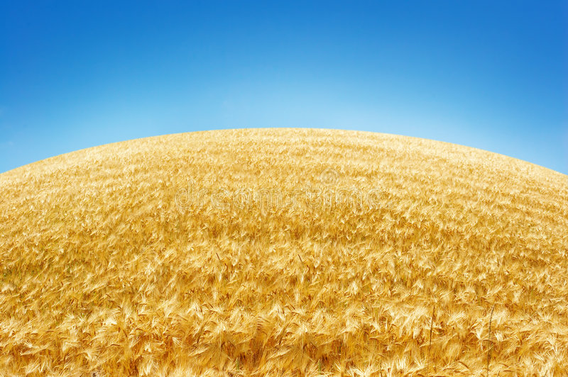 Download Blue sky and Skyline stock image. Image of crops, autumn - 1279055