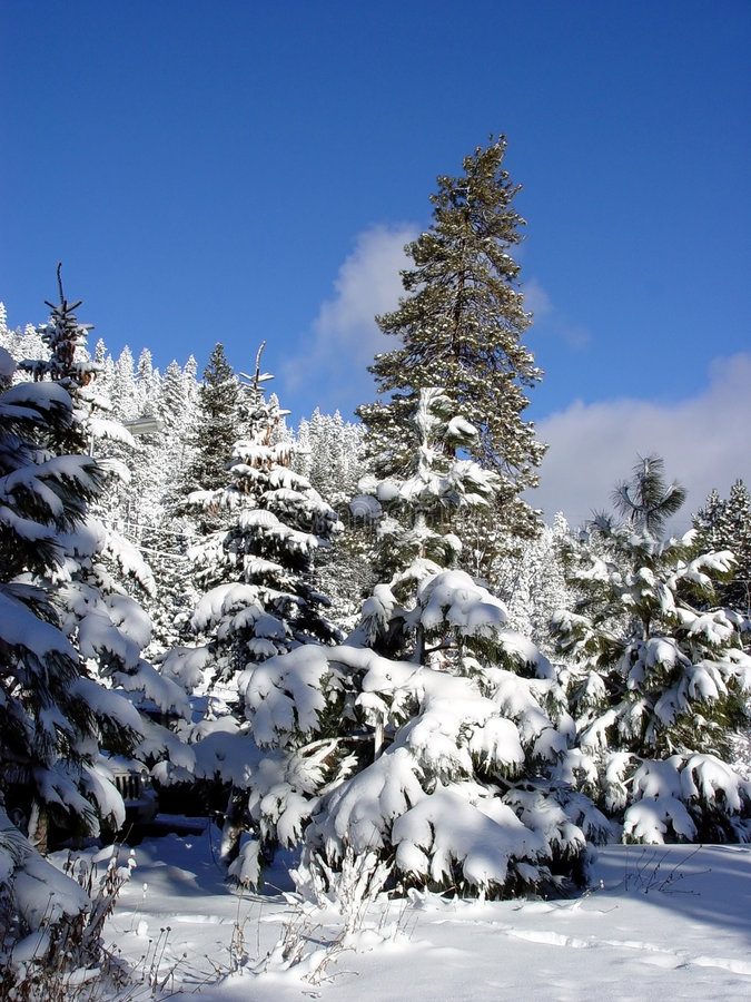 Download Blue sky and snow woods stock photo. Image of skiing, resort - 33794