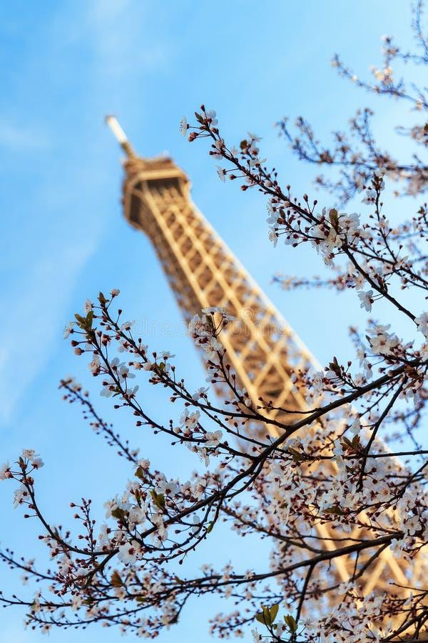 Blue sky spring Eiffel tower royalty free stock photo