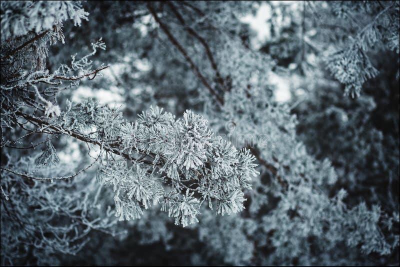 Landscape nature winter. Blue sky sun nature landscape winter royalty free stock images