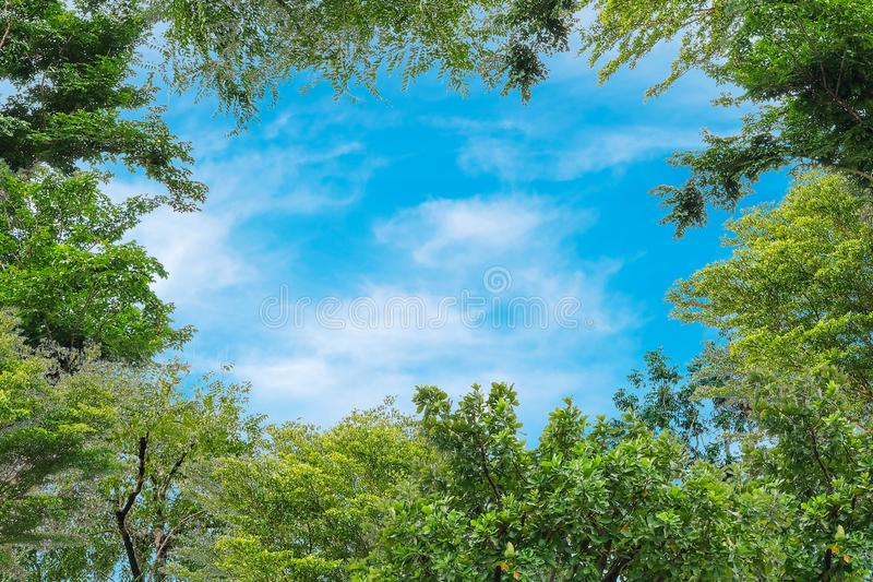 Blue sky with thinly cloud with green tree background. Blue sky with thinly cloud and green tree background stock photos