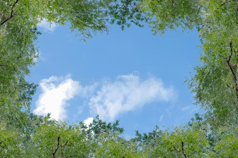 Blue sky with thinly cloud with green tree background. Beautiful blue sky with thinly cloud with green tree background royalty free stock images